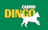 dingo casino